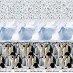 Stereogram by 3Dimka Emperor Penguines
