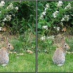 Stereogram by 3Dimka Rabbits