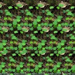Stereogram by 3Dimka Saint Patric's Day